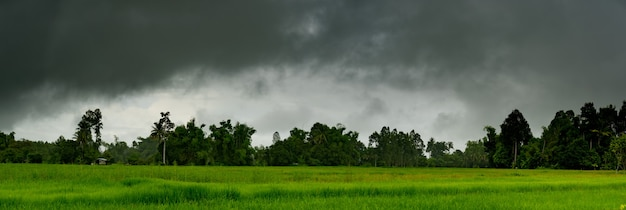 Panorama de gros nuages tempête de pluie sur le ciel au-dessus des rizières en milieu rural