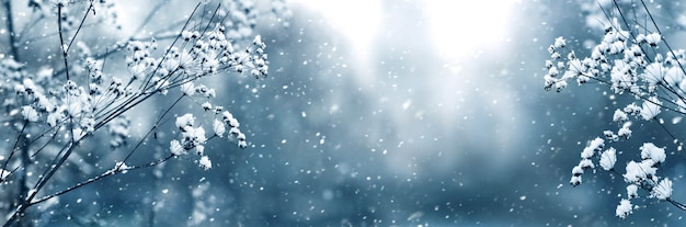 Panorama d'hiver avec des branches de plantes enneigées sur un arrière-plan flou lors d'une chute de neige