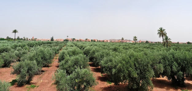 Panorama de marrakech