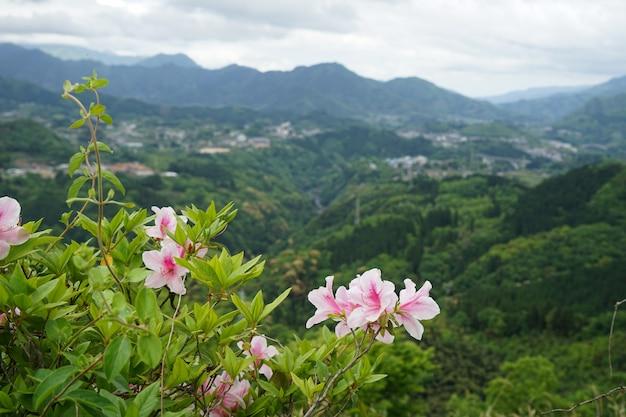 Panorama de montagne de verdure et vue sur la ville de loin avec un buisson de fleurs roses en face