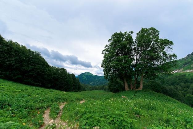 Panorama de la montagne