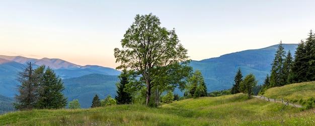 Panorama des montagnes au coucher du soleil avec grand arbre debout à l'avant