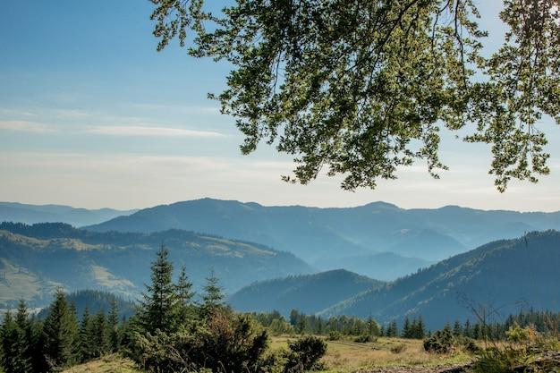 Panorama des montagnes des carpates le matin d'été