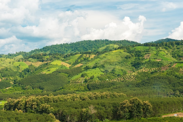 Panorama des montagnes et des rizières avec route et beau ciel