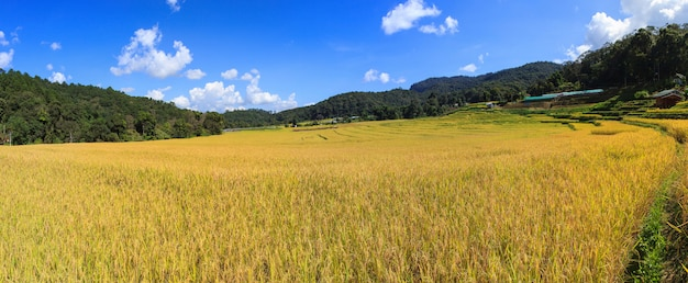 Panorama de rizières en terrasses vertes à mae klang luang, mae chaem, chiang mai, thaïlande