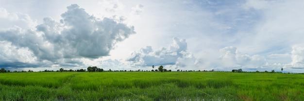 Panorama de sombres nuages d'orage au-dessus des rizières vertes