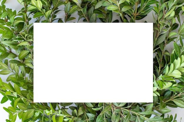 Papier carton blanc sur un feuillage vert clair.