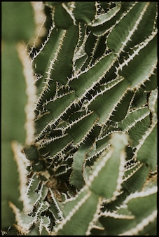 Papier peint de fond de plante de cactus, image sombre de nature esthétique