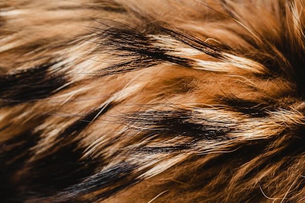 Papier peint poils de chien pelucheux à plat