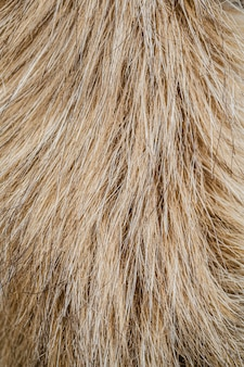 Papier peint à poils de chien plat