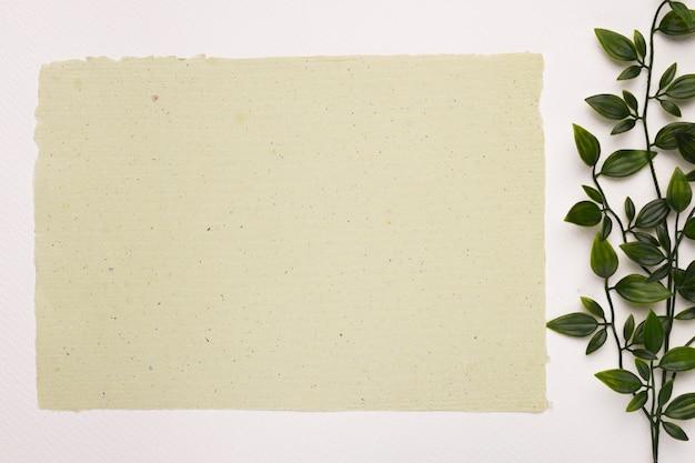Papier texturé blanc près de la plante laisse sur fond blanc