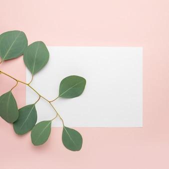 Papier vierge, branches d'eucalyptus sur fond rose pastel