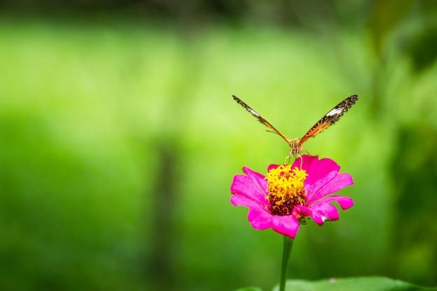 Papillon assis sur la fleur.