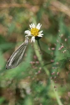 Papillon blanc avec des fleurs