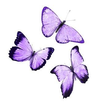 Papillon bleu tropical. isolé sur fond blanc