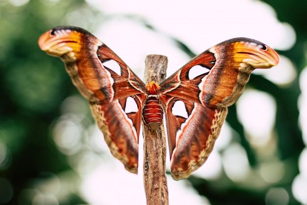 Papillon coloré sur une branche