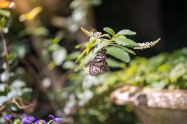 Papillon coloré sur les branches des arbres.