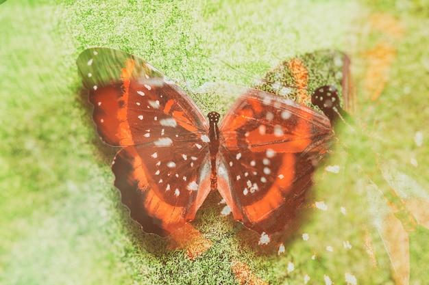 Papillon coloré. insecte tropical. belle mite. sur fond d'herbe verte.