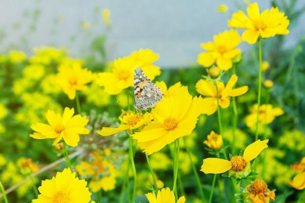 Papillon coloré se nourrissant de la fleur close up selective focus