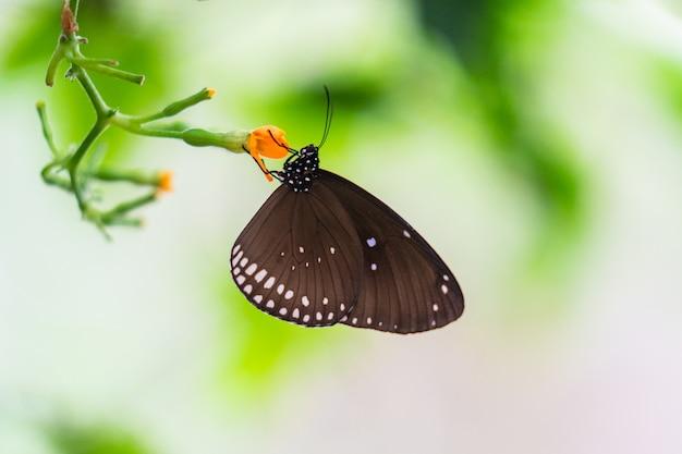 Papillon coloré tropical
