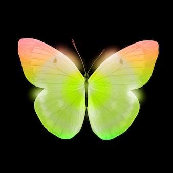 Papillon de couleur isolé sur fond noir. photo de haute qualité
