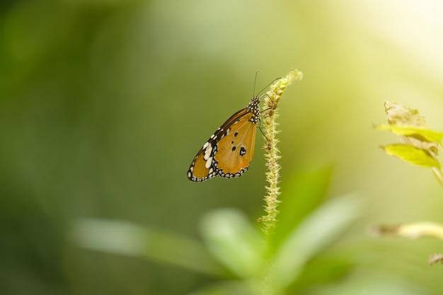 Papillon et doux soleil.