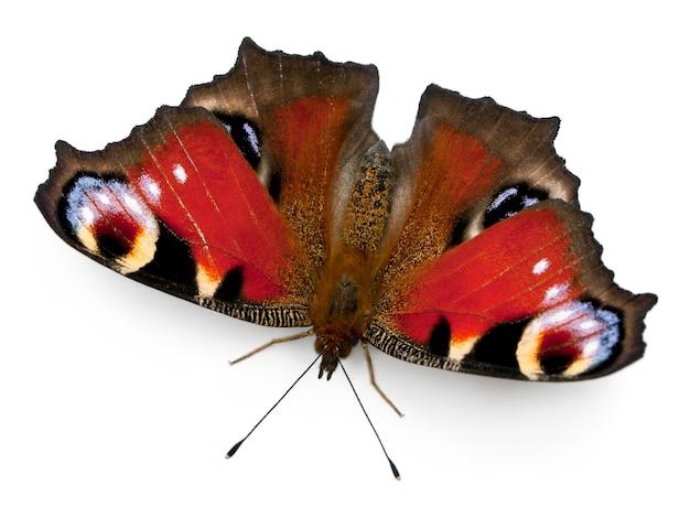 Papillon du paon européen inachis io isolé