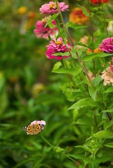Papillon fermé sur la fleur - flou sur la surface de la fleur.