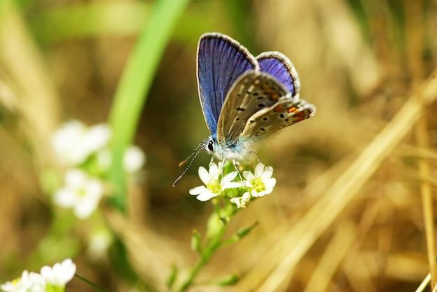 Papillon sur une feuille verte