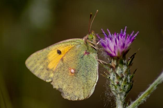 Papillon sur une fleur en fleur