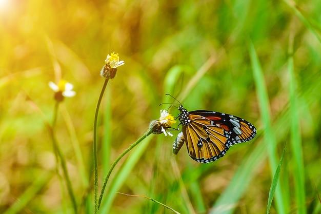 Papillon sur la fleur d'herbe, mise au point sélective