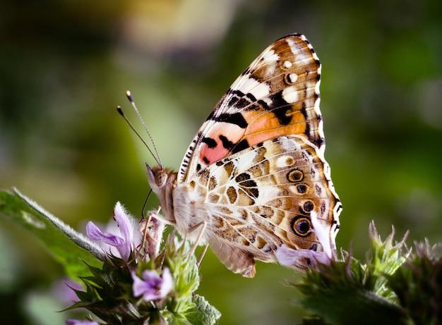 Papillon sur une fleur de jardin.
