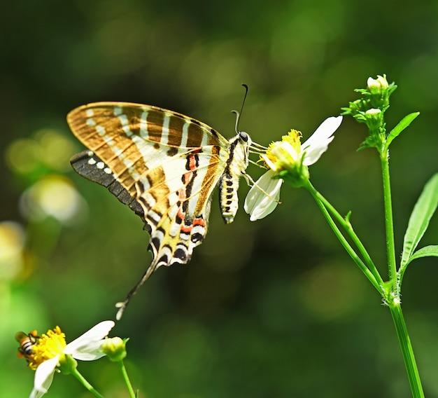 Papillon sur fleur jaune dans le jardin