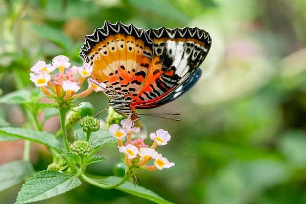 Papillon sur fleur nature fond flou