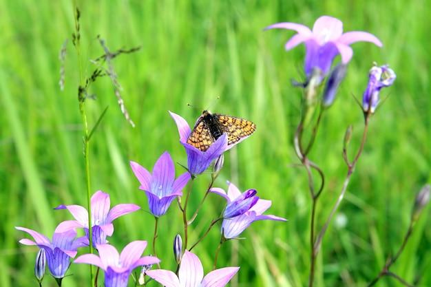 Papillon sur fleur parmi herbe verte