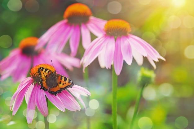 Papillon sur une fleur rouge à la lumière du coucher du soleil.