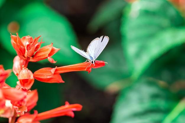 Papillon sur une fleur rouge