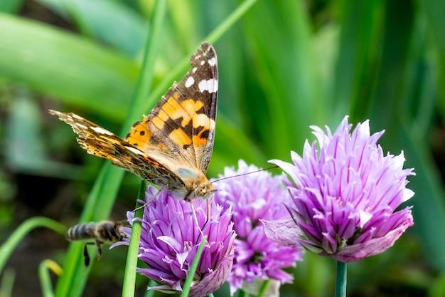 Papillon sur fleur de trèfle. une abeille vole vers la fleur