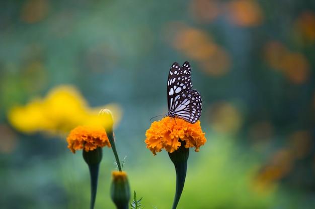 Papillon sur la fleur