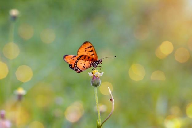 Papillon avec des fleurs