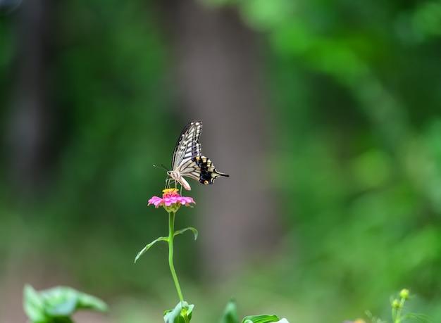 Papillon flou fond