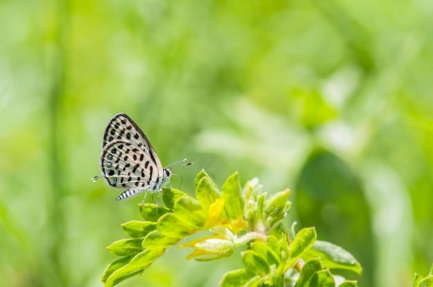 Papillon gros plan de pierrot tacheté