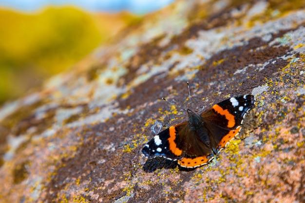 Un papillon incroyablement beau sur fond jaune de la nature automnale des montagnes des carpates est assis sur une pierre avec un motif inhabituel