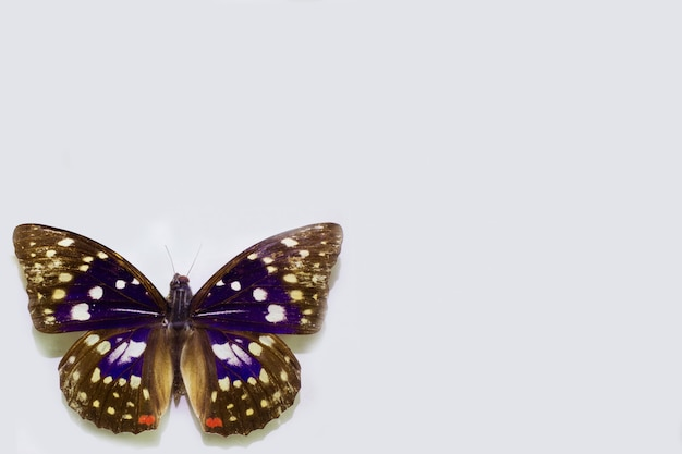 Papillon isolé sur blanc