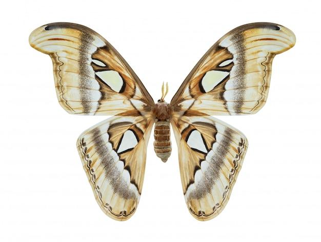 Papillon isolé