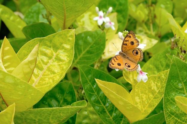 Papillon jaune sur la fleur