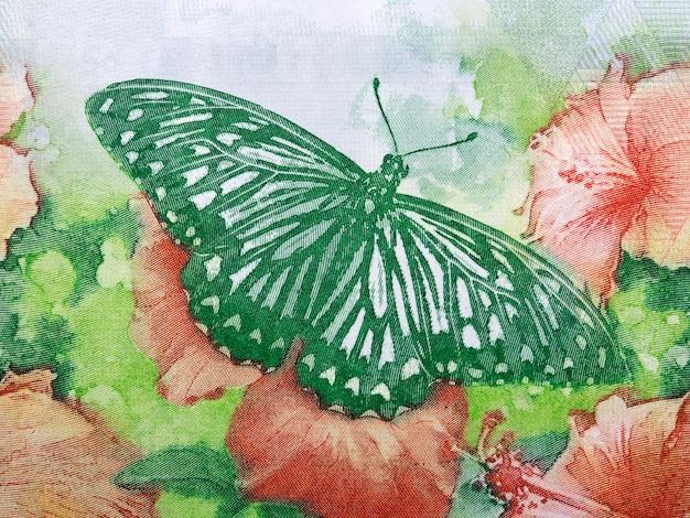 Papillon machaon sur la fleur de l'argent de hong kong