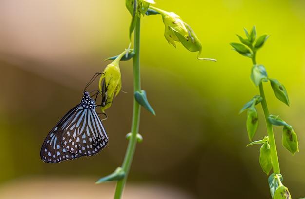 Papillon multicolore se bouchent