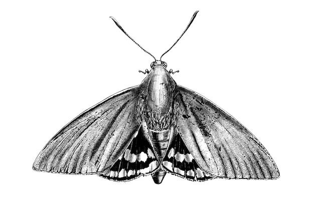 Papillon noir et blanc dessiné à la main isolé sur fond blanc.