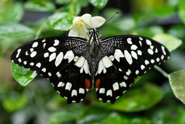 Papillon noir et blanc sur fond flou